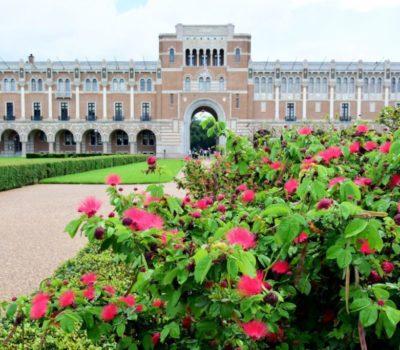 rice-university