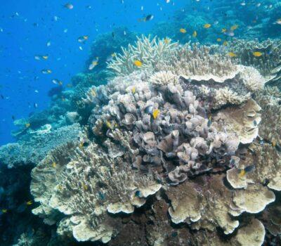 Coral Moore reef SLR 20181129-CALYPSO©2018 SJI-6457