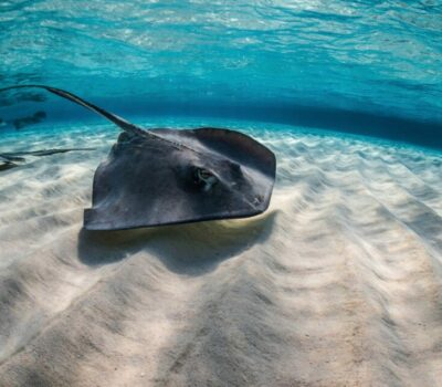 stingrays_on_sand_patch-770x480@2x